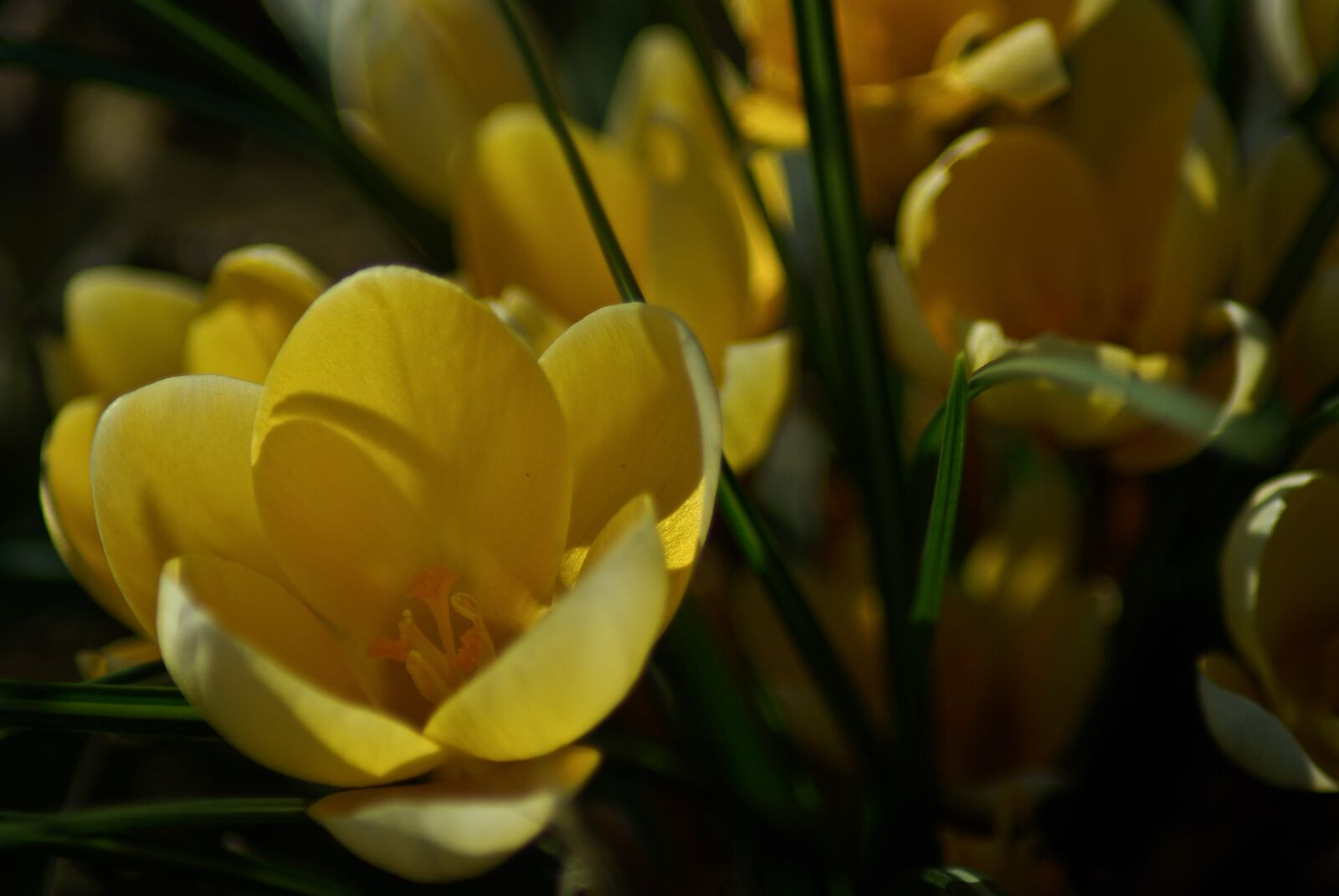 "Pentax K10D sample photo. ""Flower, yellow, flowers"" photography"