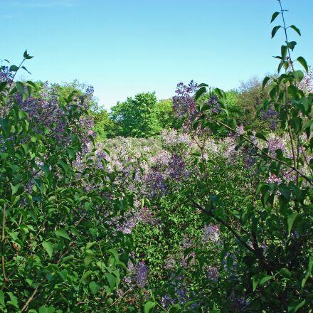 landscape, nature, bloom, Sony DSC-W30
