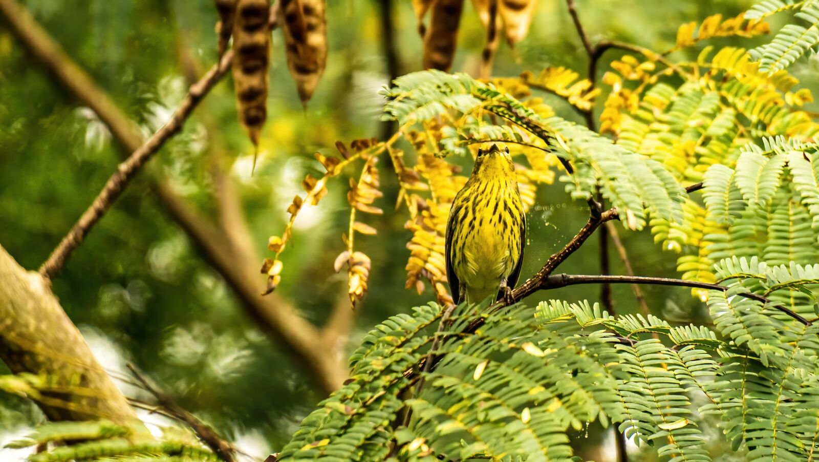 """Sony a6400 sample photo. """"Cape may warbler, warbler"""" photography"""
