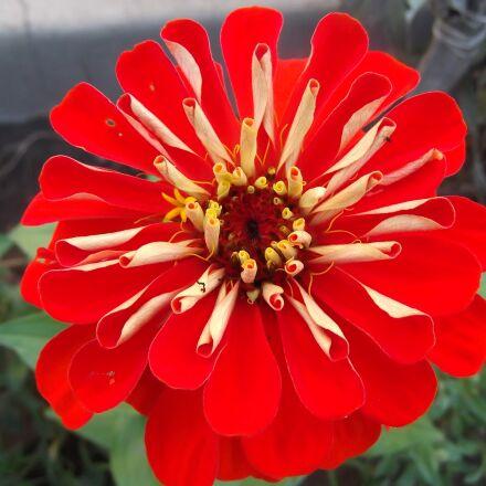 merchant louis, flower macro-2017, Fujifilm FinePix T350