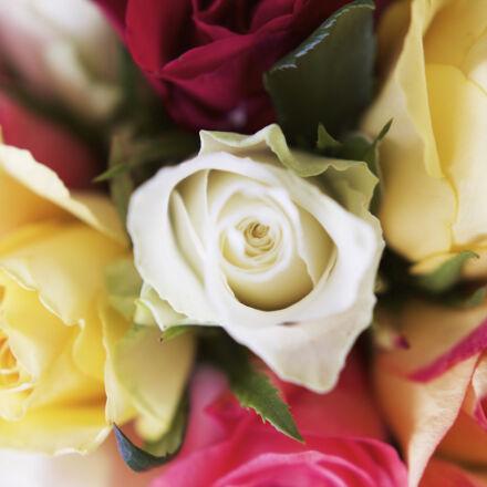 colorful, detail, flower, flowers, Canon EOS 1100D