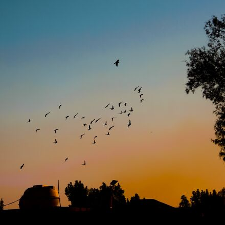 sunset, birds, nature, Canon EOS 550D