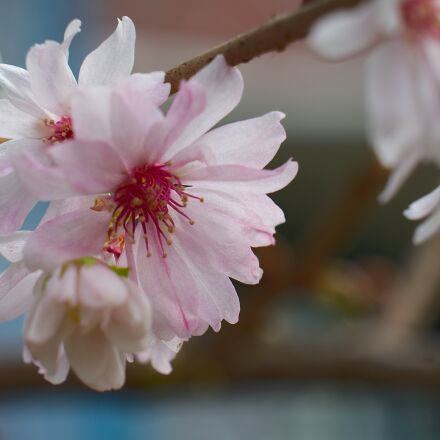 spring, spring awakening, harbinger, Fujifilm X-T10