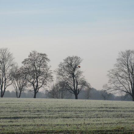nature, trees on feldrand, Canon DIGITAL IXUS 990 IS