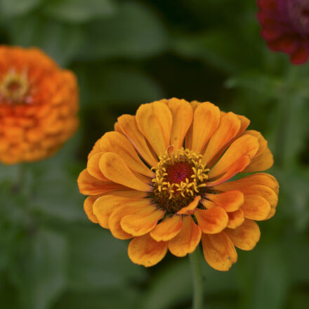 nature, flowers, summer, yellow, Canon EOS 550D