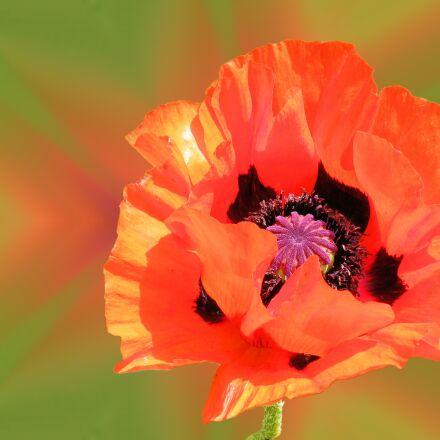 flower, blossom, bloom, Fujifilm FinePix S8100fd