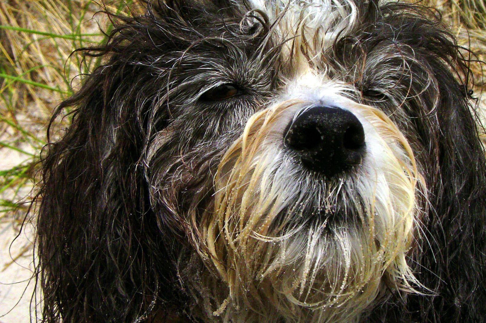 "Sony DSC-P72 sample photo. ""Dog, bitch, animal"" photography"