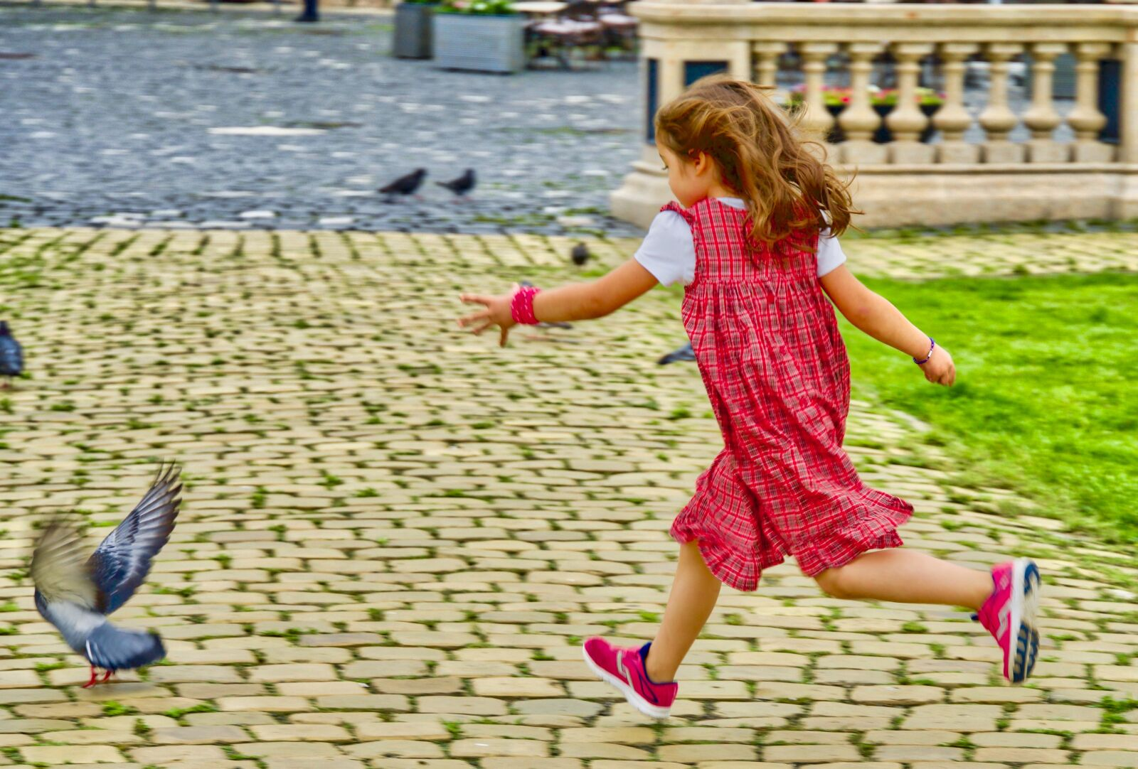 """Sony a6500 sample photo. """"Girl, chase, pigeon"""" photography"""