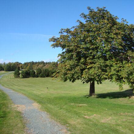 field, trail, tree, Sony DSC-W120