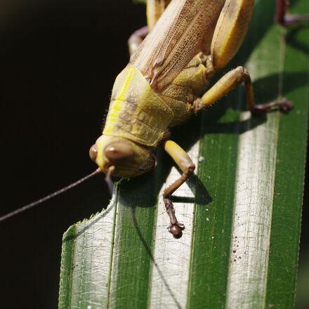 leaf, locusts, nature, Pentax K-X