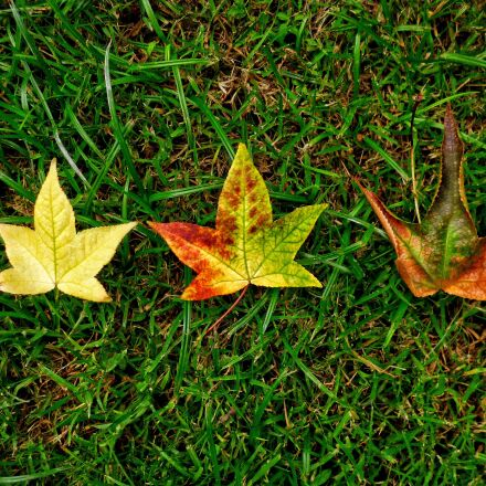 autumn, leaves, tree, Panasonic DMC-FH8