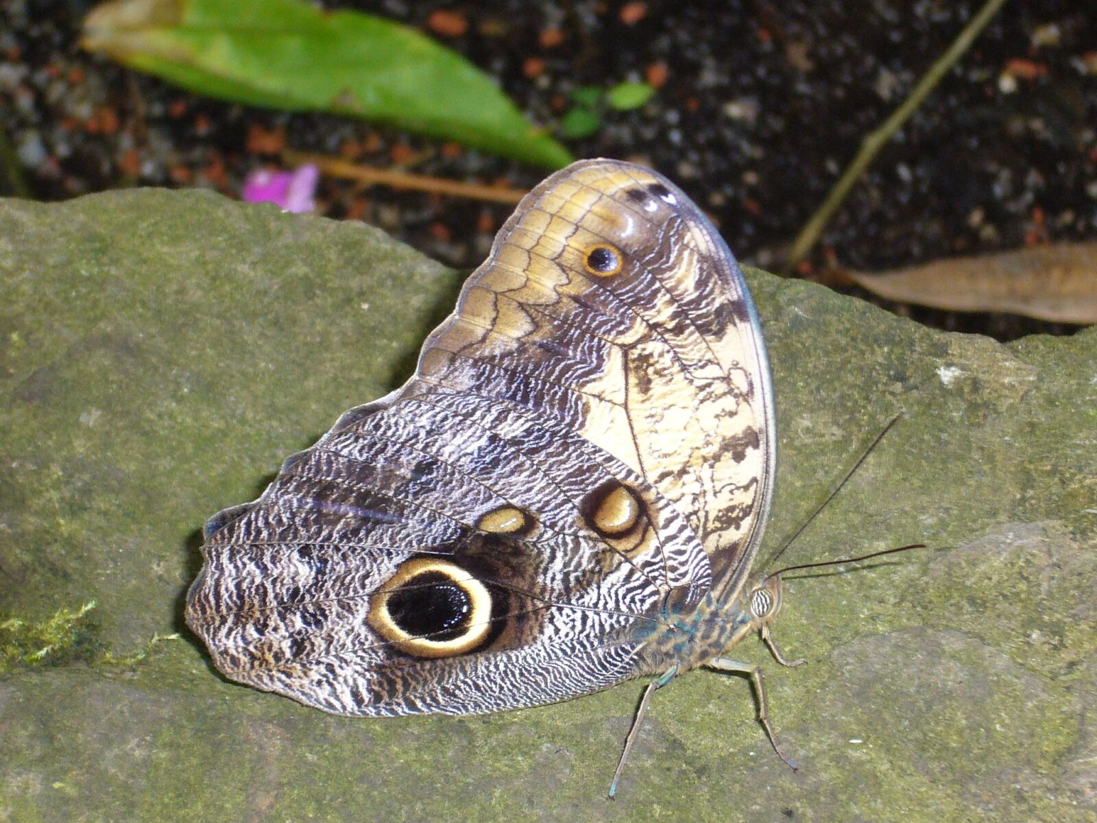 butterfly, violet, stone
