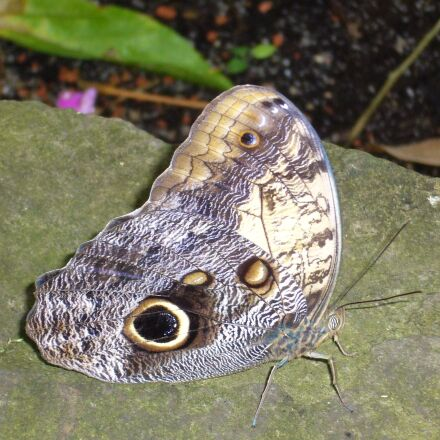 butterfly, violet, stone, Panasonic DMC-LS2