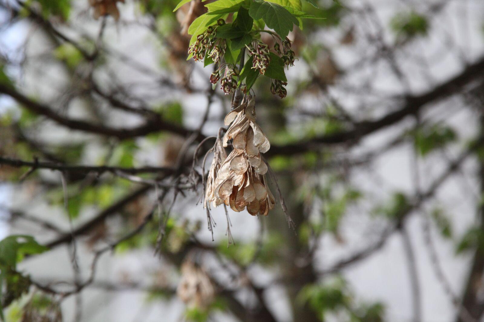 "Canon EOS 5D Mark II sample photo. ""Flower, nature, tree"" photography"