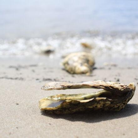 bay, beach, clams, closeup, Canon EOS 60D