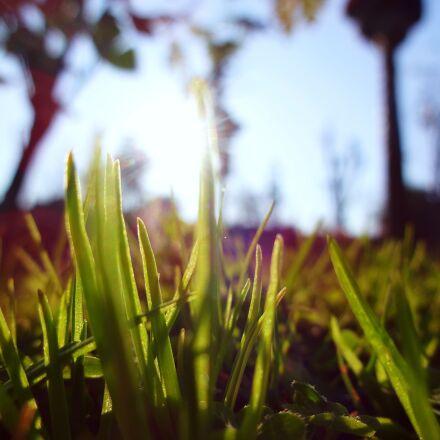 macro, grass, green, Sony DSC-WX150
