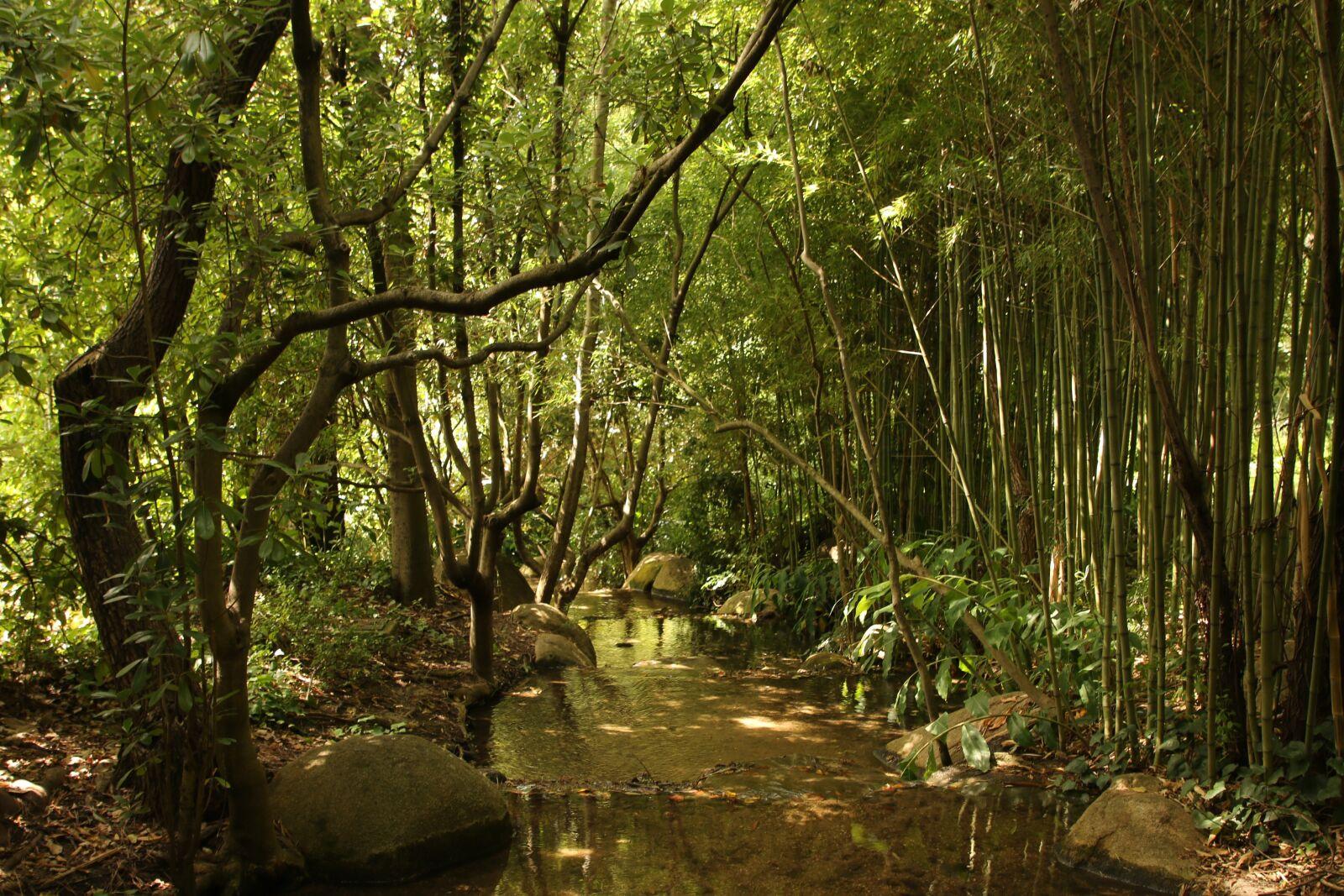 """Canon EOS 70D sample photo. """"Vegetation, lisbon, garden"""" photography"""
