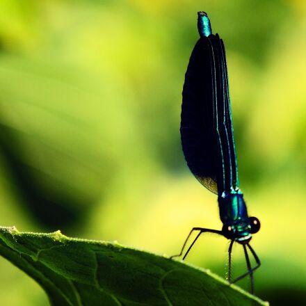 dragonfly, bug, green, Fujifilm FinePix HS25EXR