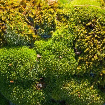 lichen, moss, nature, Pentax K10D