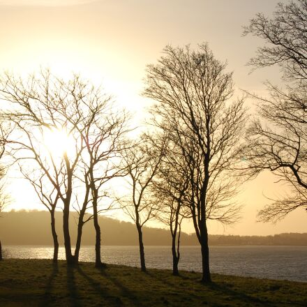sky, sunset, trees, Nikon D50
