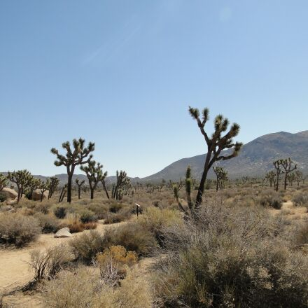 desert, joshua tree, national, Sony DSC-HX1