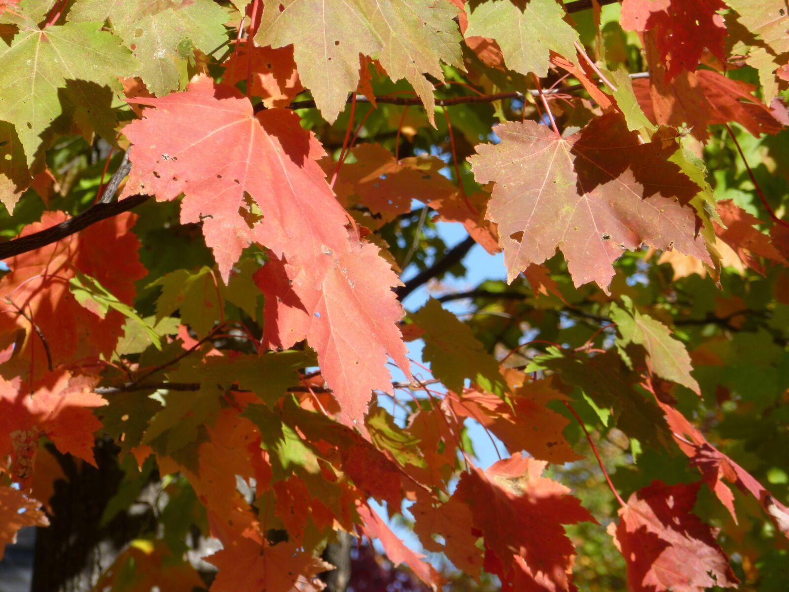"Panasonic DMC-FH20 sample photo. ""Leaves, leaf, fall"" photography"