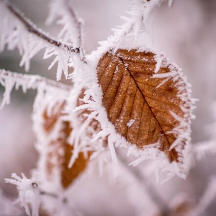 winter, frost, cold, Sony ILCE-7SM2