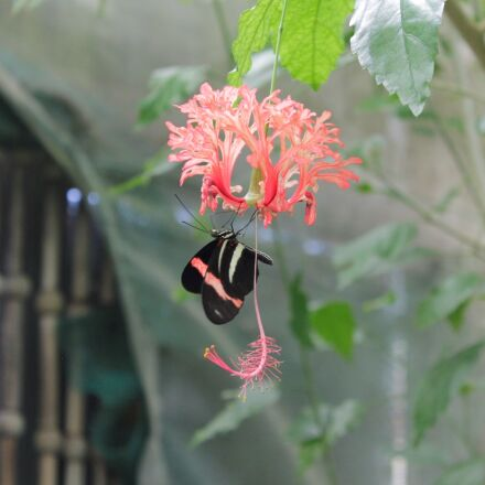 butterfly, flower, nature, Canon EOS 1100D