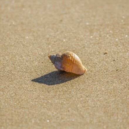 beach, shell, ocean, Canon EOS 60D