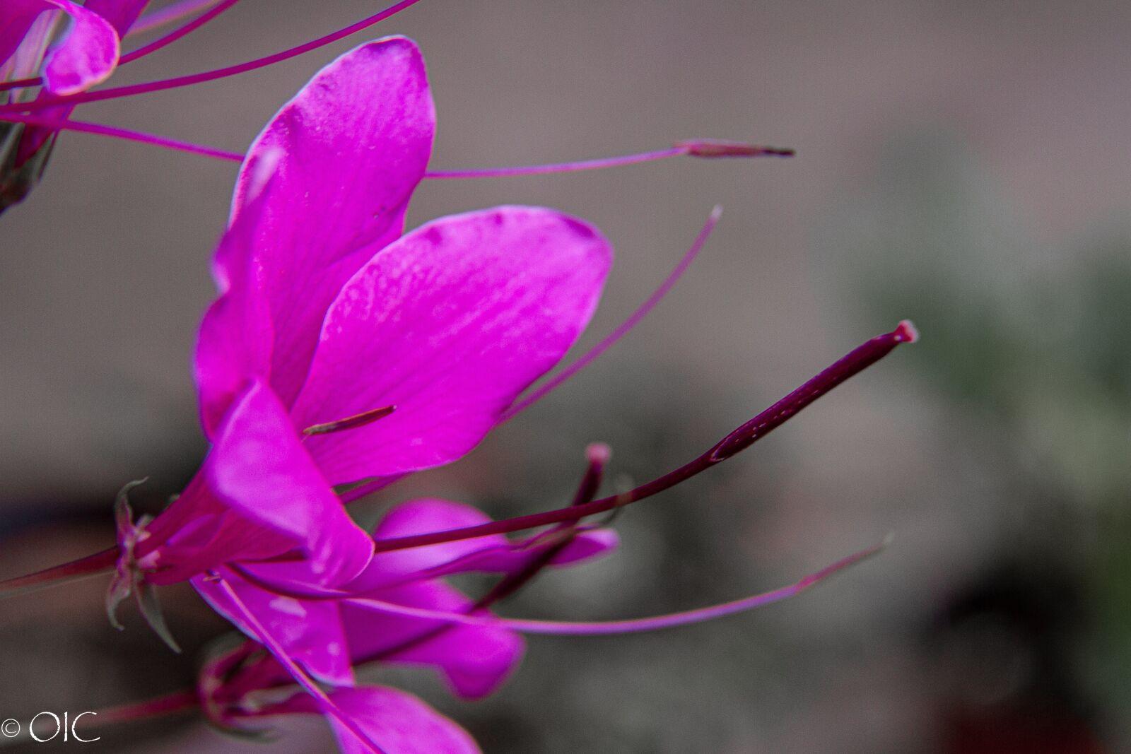 "Canon EOS 7D sample photo. ""Flower, fuchsia, plant"" photography"