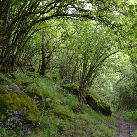 enchanting, forest, hike, nature, Nikon D5200