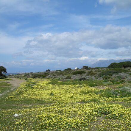 dunes, sand, flowers, Sony DSC-W17