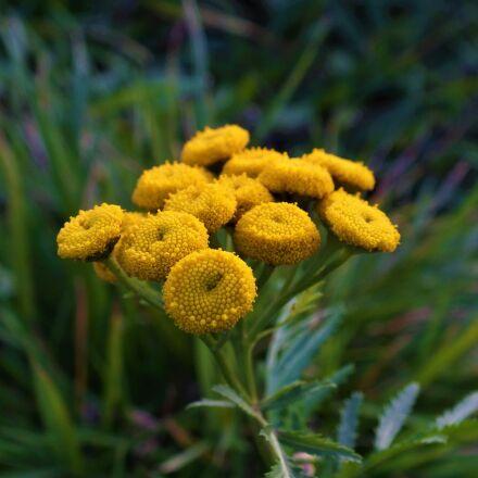 flower, green, yellow, Fujifilm FinePix HS25EXR