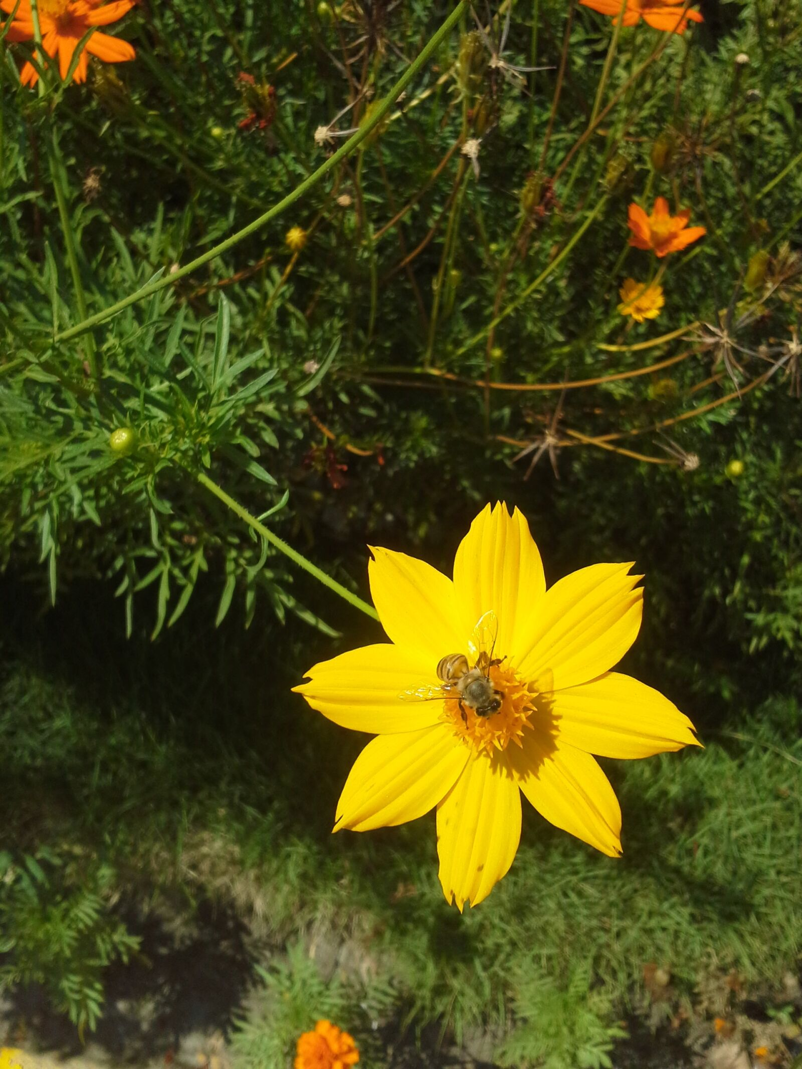 yellow flower, flora, insect