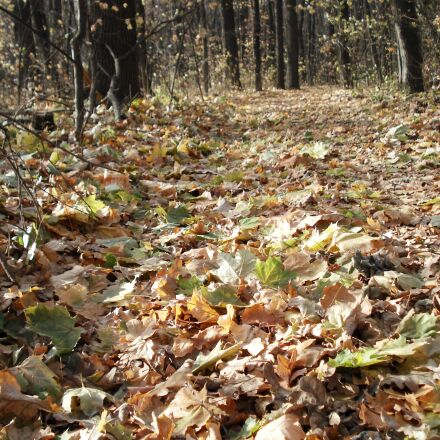 forest, forest road, autumn, Sony DSC-W30